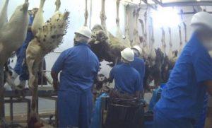 بازار خریدگوشت شترمرغ