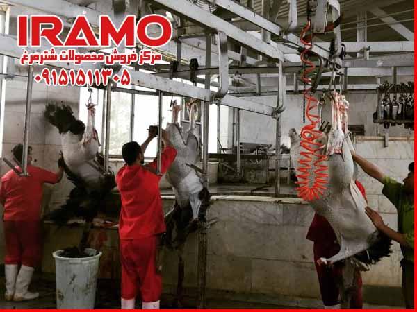 قیمت گوشت شترمرغ در فروش عمده
